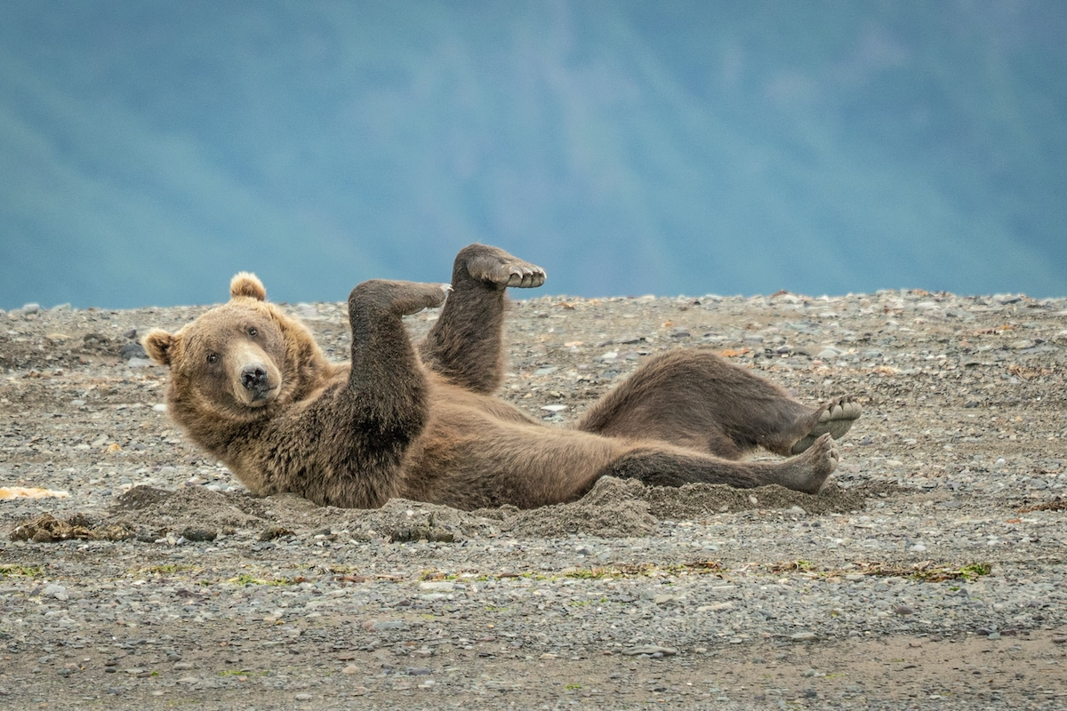 The Comedy Wildlife Photography Awards Best so far 2020