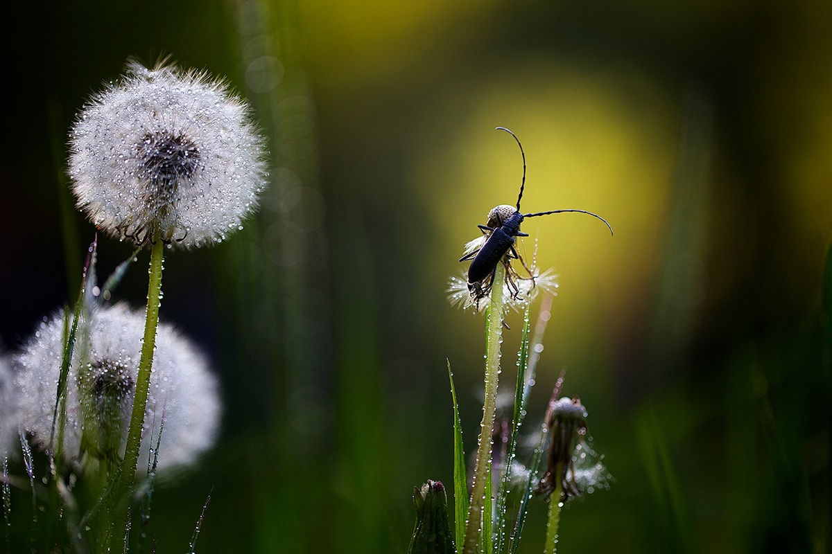 Marco Photographie d'insectes